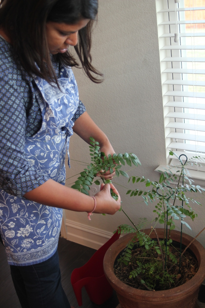 I want a magical herb tree in my kitchen! I can't even grow basil!